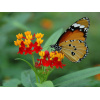 papiliorama1-720-1.33<div class='url' style='display:none;'>/</div><div class='dom' style='display:none;'>rkmg.ch/</div><div class='aid' style='display:none;'>650</div><div class='bid' style='display:none;'>8540</div><div class='usr' style='display:none;'>178</div>